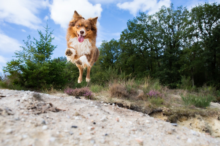 Dog-Action-jumping