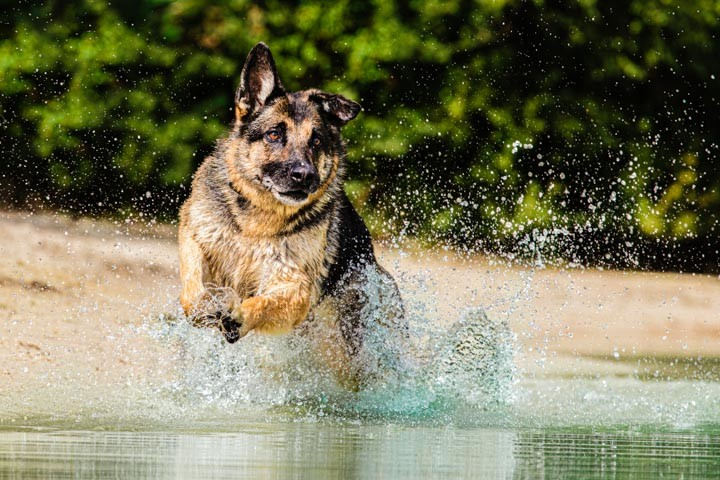 Dog-Action-water