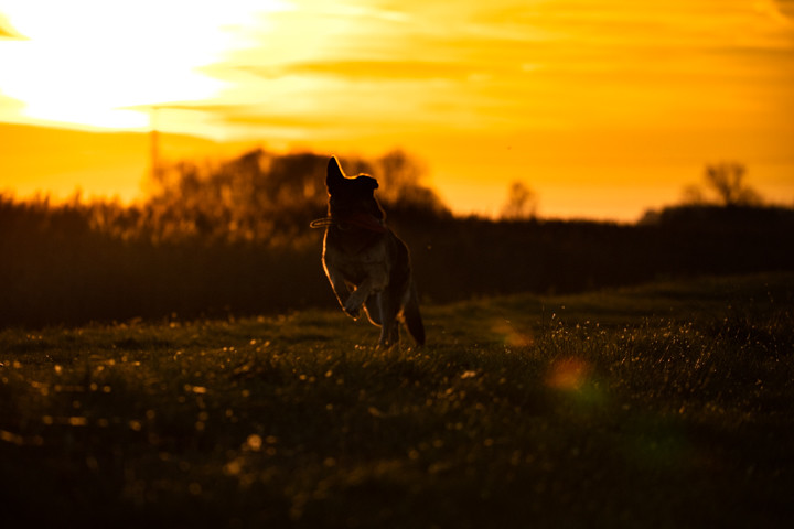 Dog-Action-sunrise