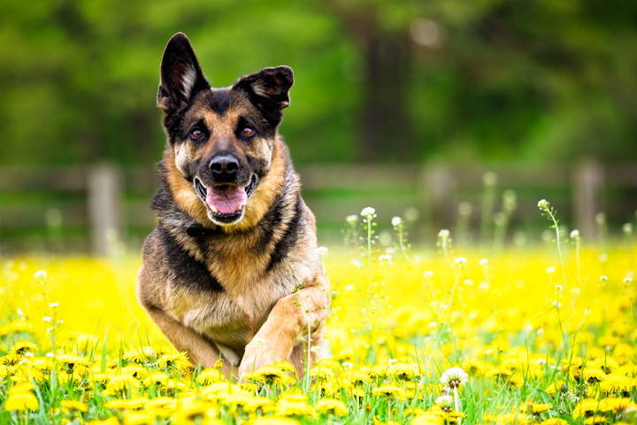 Dog-Action-flowers